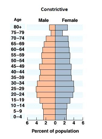 What are the different types of population pyramids