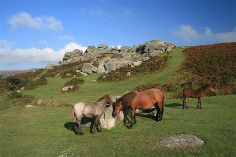Dartmoor National Park on AboutBritain