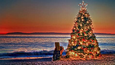 Christmas in Australia: customs and traditions - Dingoos