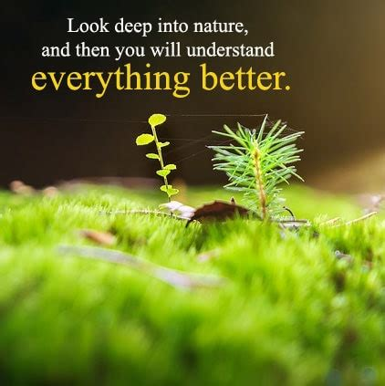 Beautiful Nature Quotes Images, Nature Hindi Status For